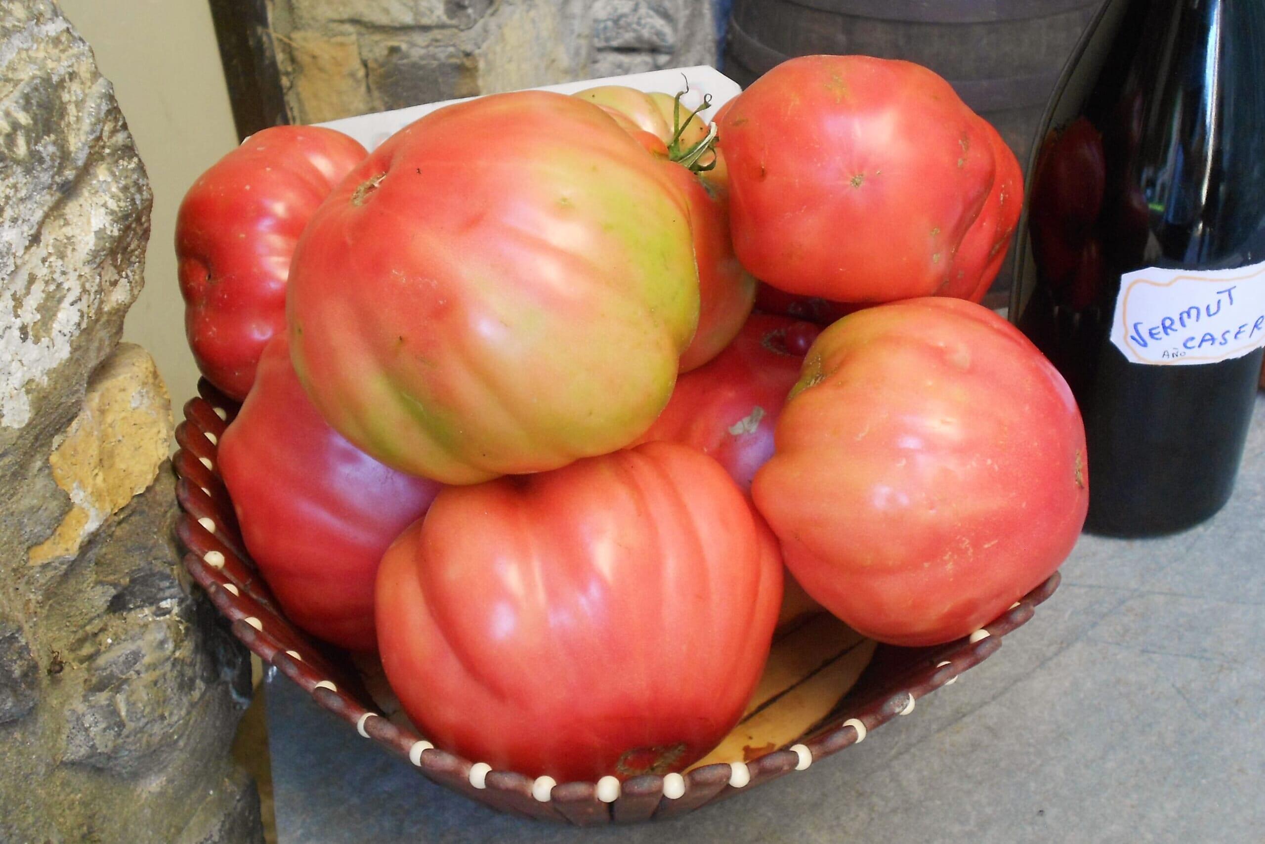 北スペインのアラゴン州のバルバストロ産のピンクトマト
