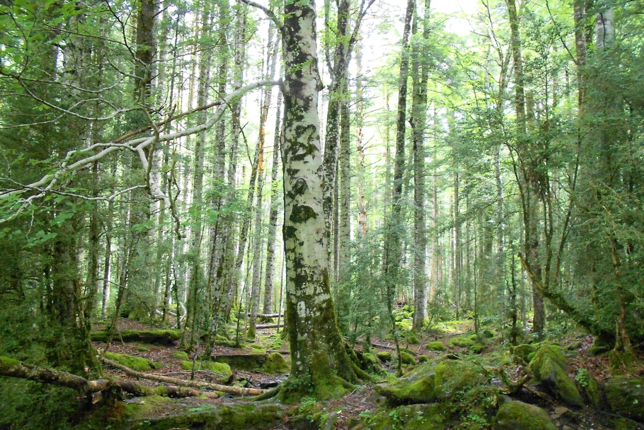 北スペインの自然を代表するオルデサ国立公園