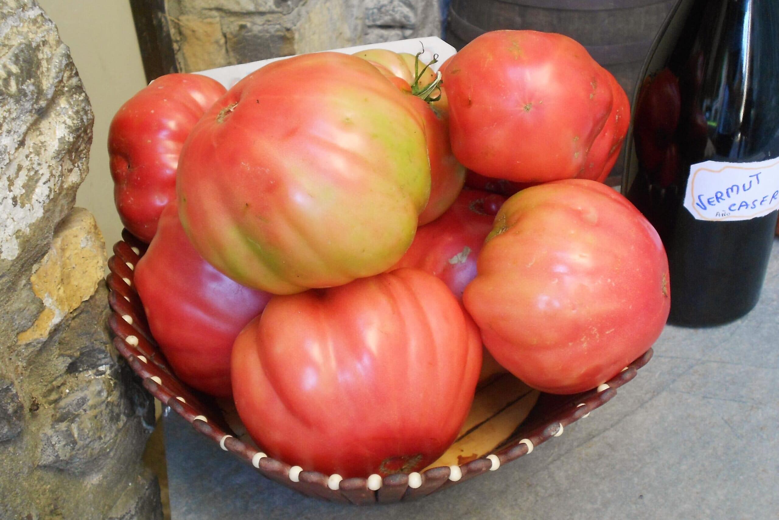 北スペインのピンクトマト
