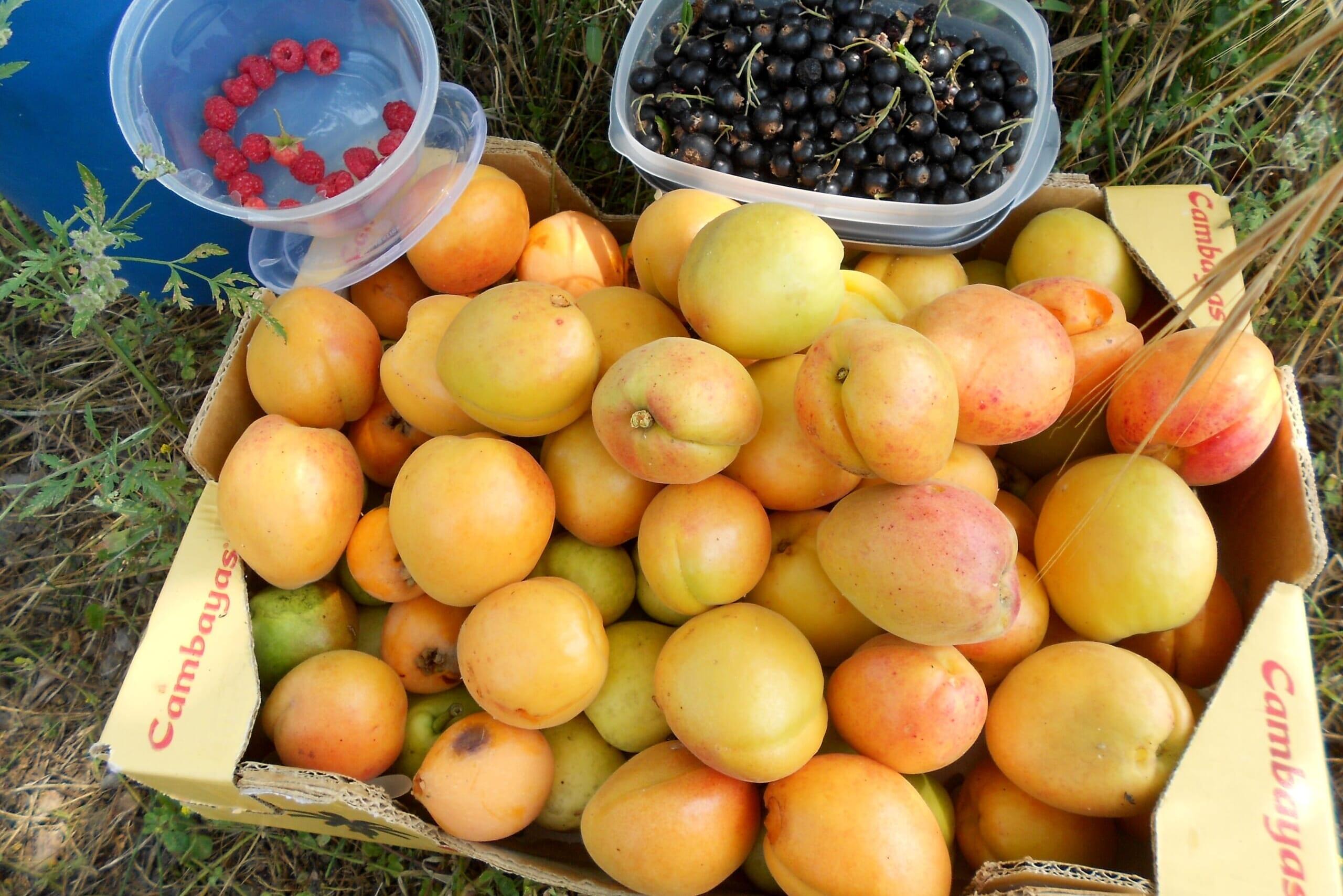 北スペインの果物